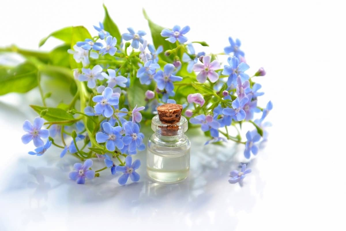 aromatherapy bloom blossom oil