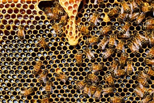 beekeeping beehive
