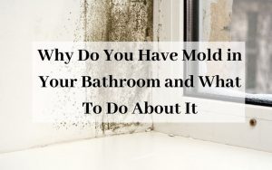 Why Do You Have Mold in Your Bathroom and What To Do About It